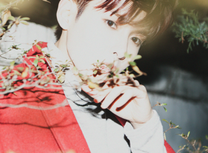 ryeowook-788x450