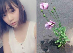 uekinao-poppy-1600x975